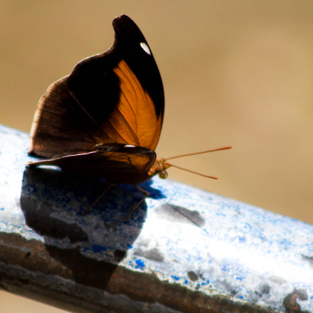 Beautiful Butterfly, Canon EOS REBEL T5, Canon EF 75-300mm f/4-5.6
