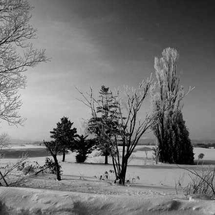 rime monochrome, Pentax Q-S1, 08 Wide Zoom 3.8-5.9mm F3.7-4
