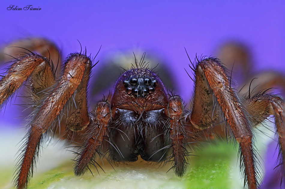 Photograph arachnophobia by selim tümir on 500px