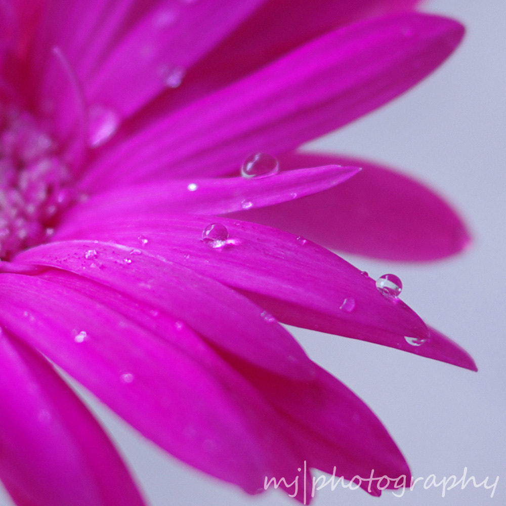 Photograph Water Pearls by Yeung  Mary Jacqueline on 500px
