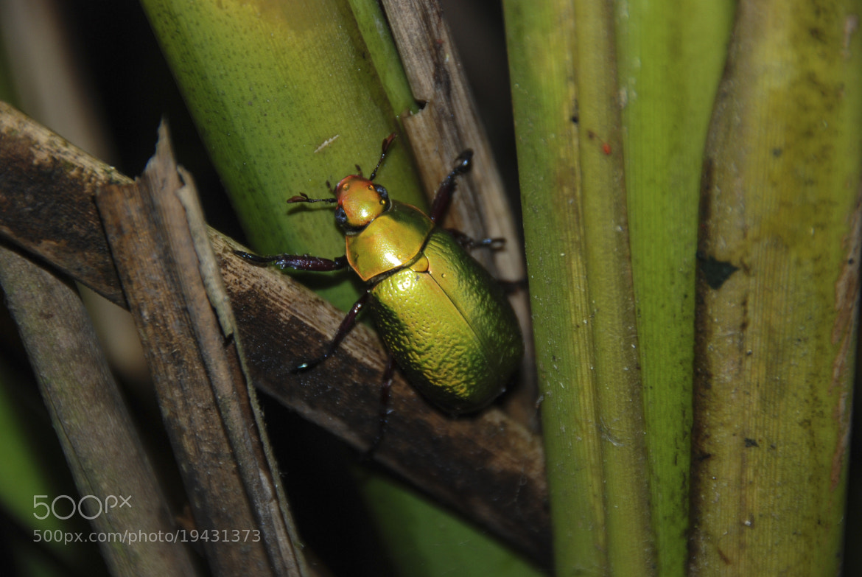 Photograph Escarabajo by Felipe Carrasquilla on 500px