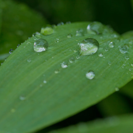 Green leaf, Canon EOS 70D, Canon EF-S 60mm f/2.8 Macro USM