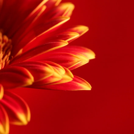 A flower with red, Canon EOS 5D MARK II, Tamron 90mm f/2.8