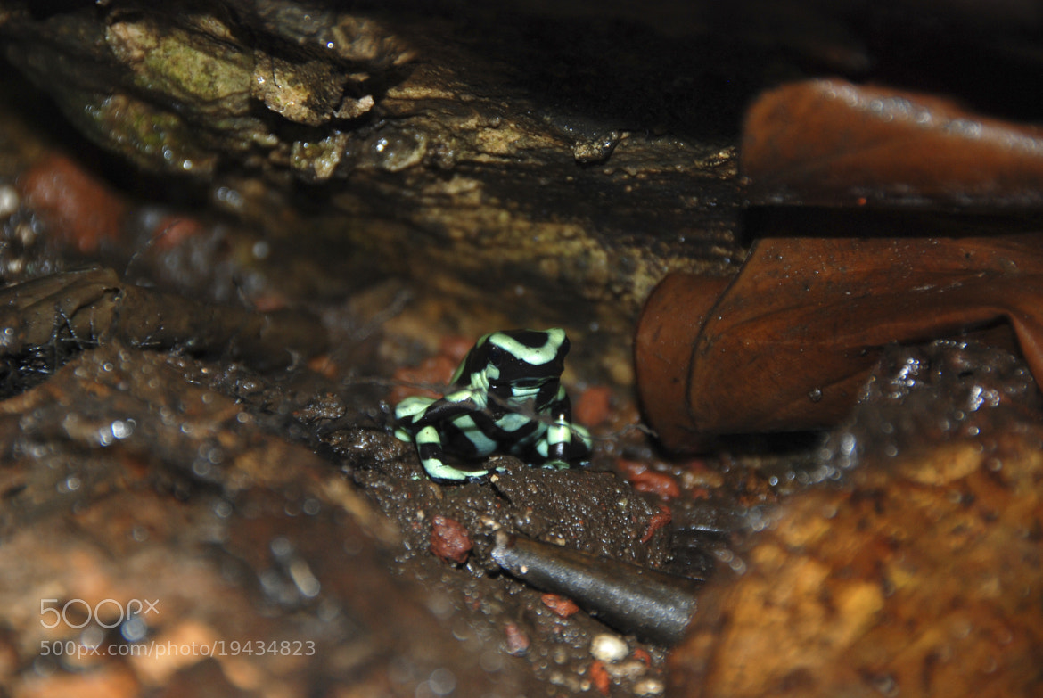 Photograph Frog by Felipe Carrasquilla on 500px