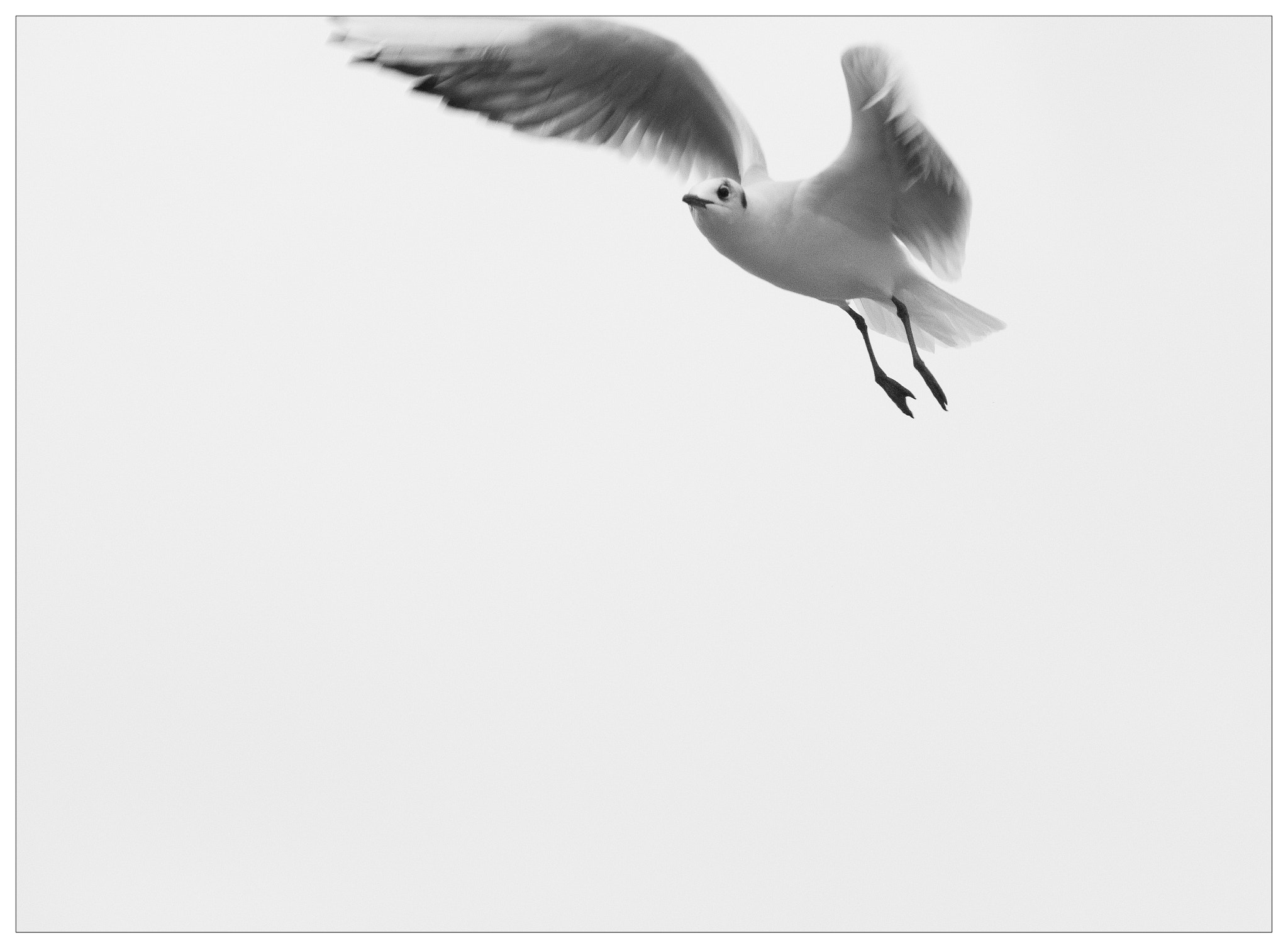 Photograph Seagull by Fritz S. on 500px