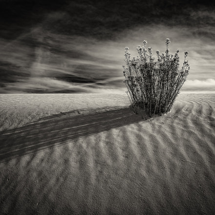 Shadows in the Sands, Nikon D810, PC-E Nikkor 24mm f/3.5D ED