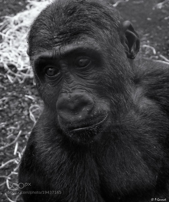 Photograph Germany Munich Zoo Park by Garmatis Pantelis on 500px