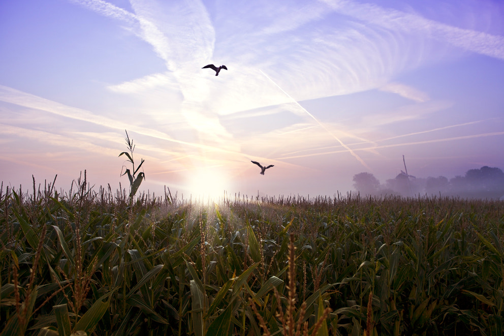 Photograph The cornfield by Valentijn Tempels on 500px