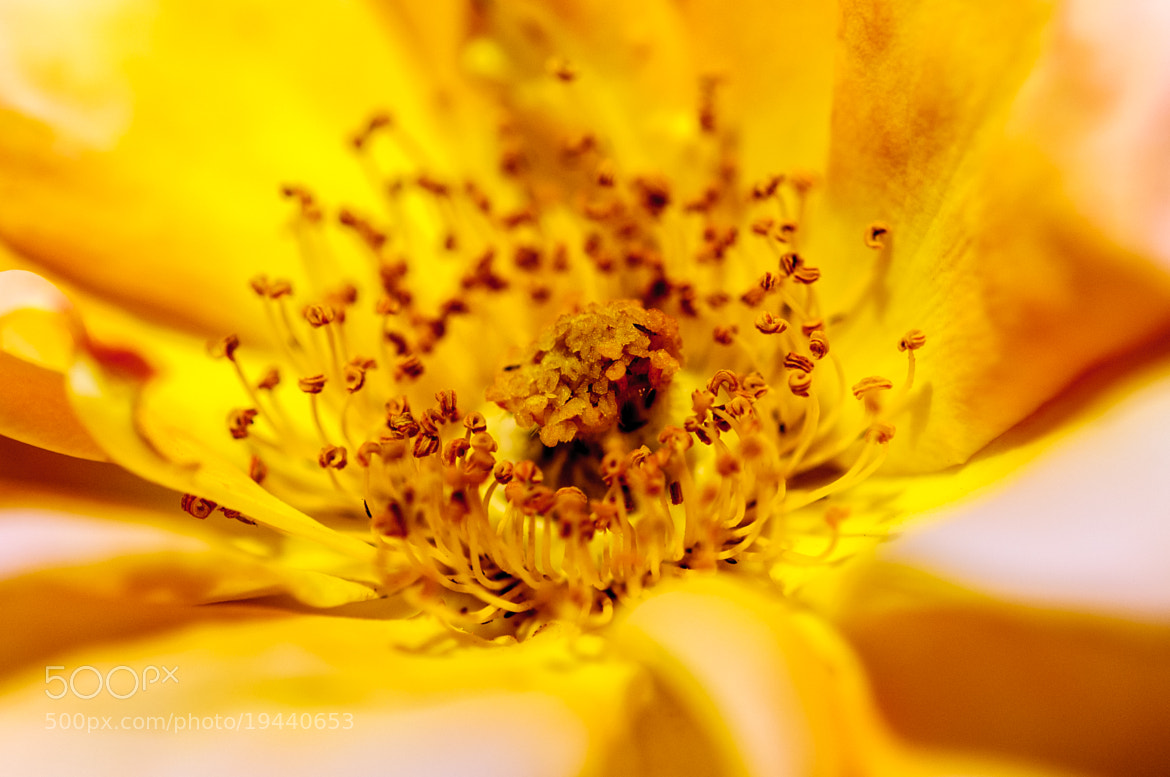 Photograph Flower II by i500 ... on 500px