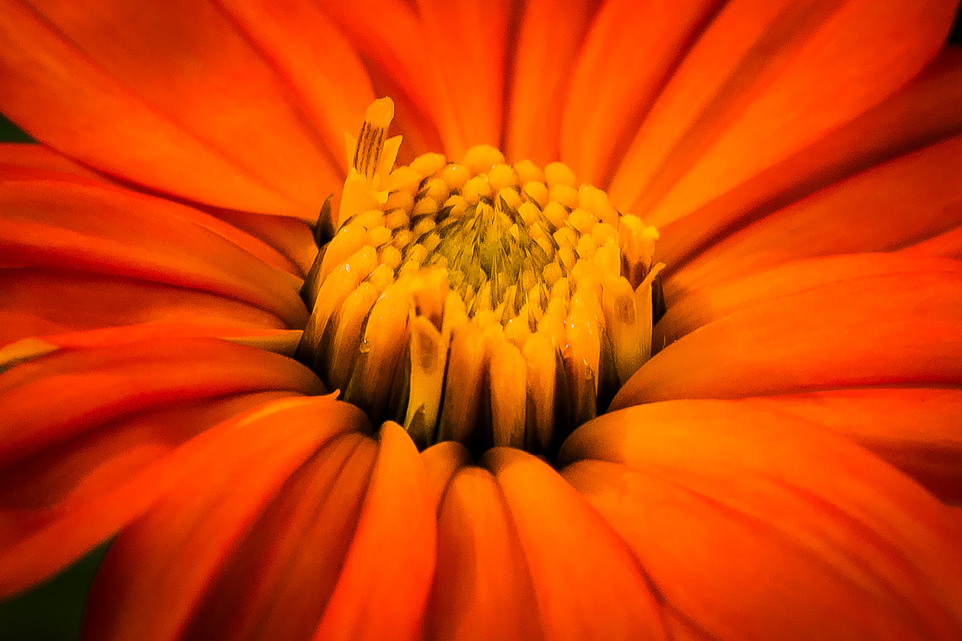 Photograph Bloom by George Bloise on 500px