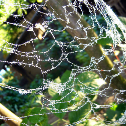 Spider Web, Panasonic DMC-LS2