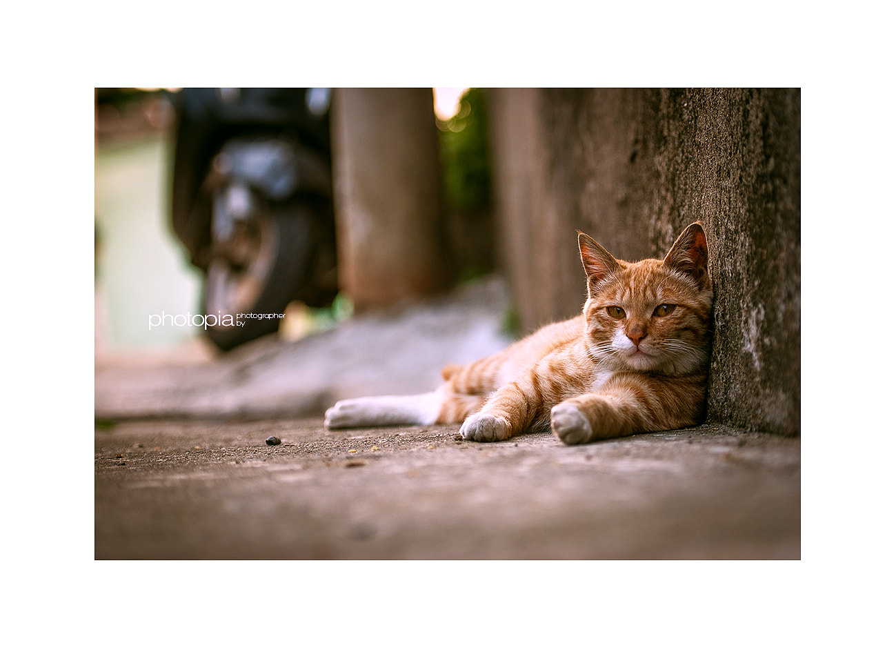 Photograph #.cat by LEE GEON on 500px