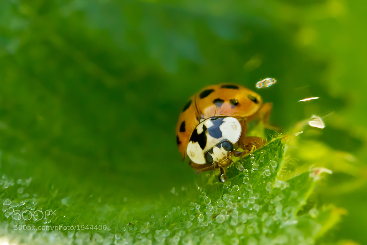 Photograph Lady bird by Markus _ on 500px