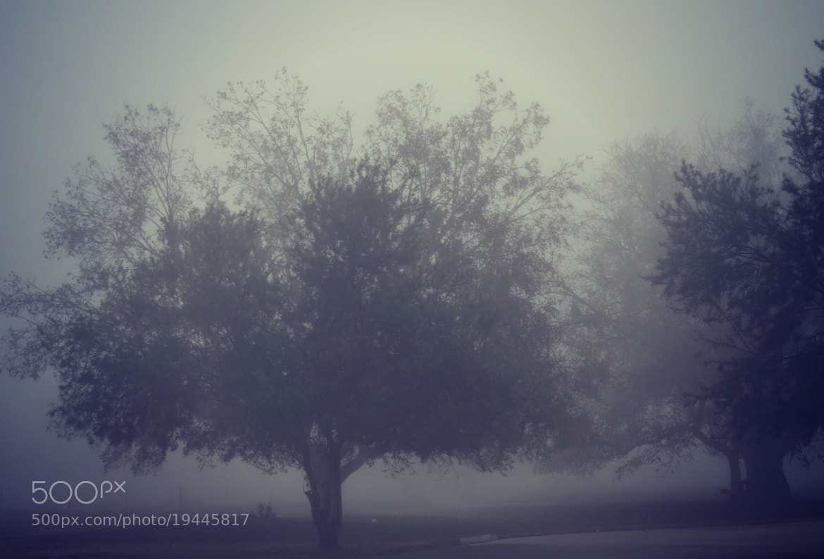 Photograph beautiful foggy morning by Erin R. Photography on 500px