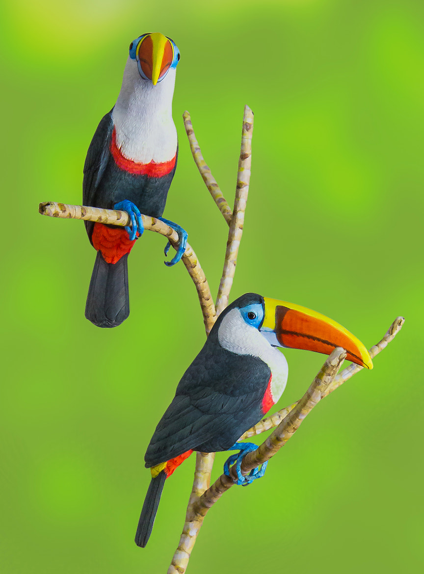 Photograph Colorful Toucan by George Bloise on 500px