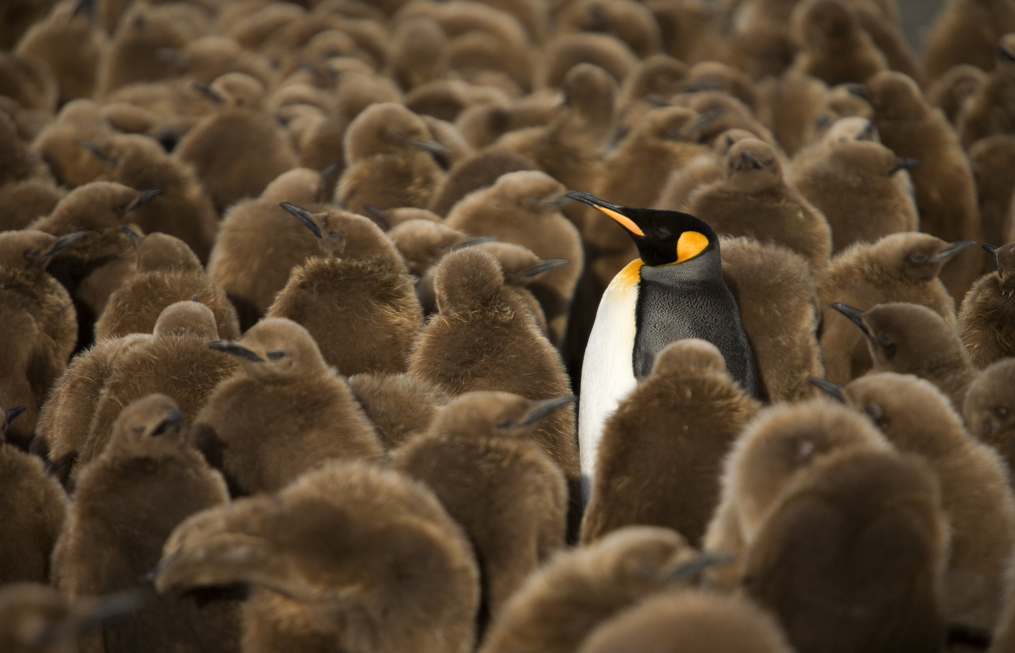 Photograph Why am I here?????? by Steve Shuey on 500px