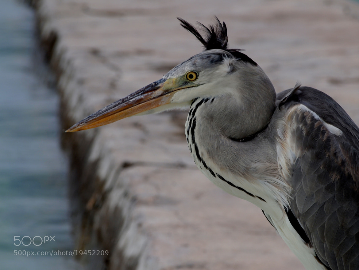 Photograph Bad hair day by Andrew Adamson on 500px