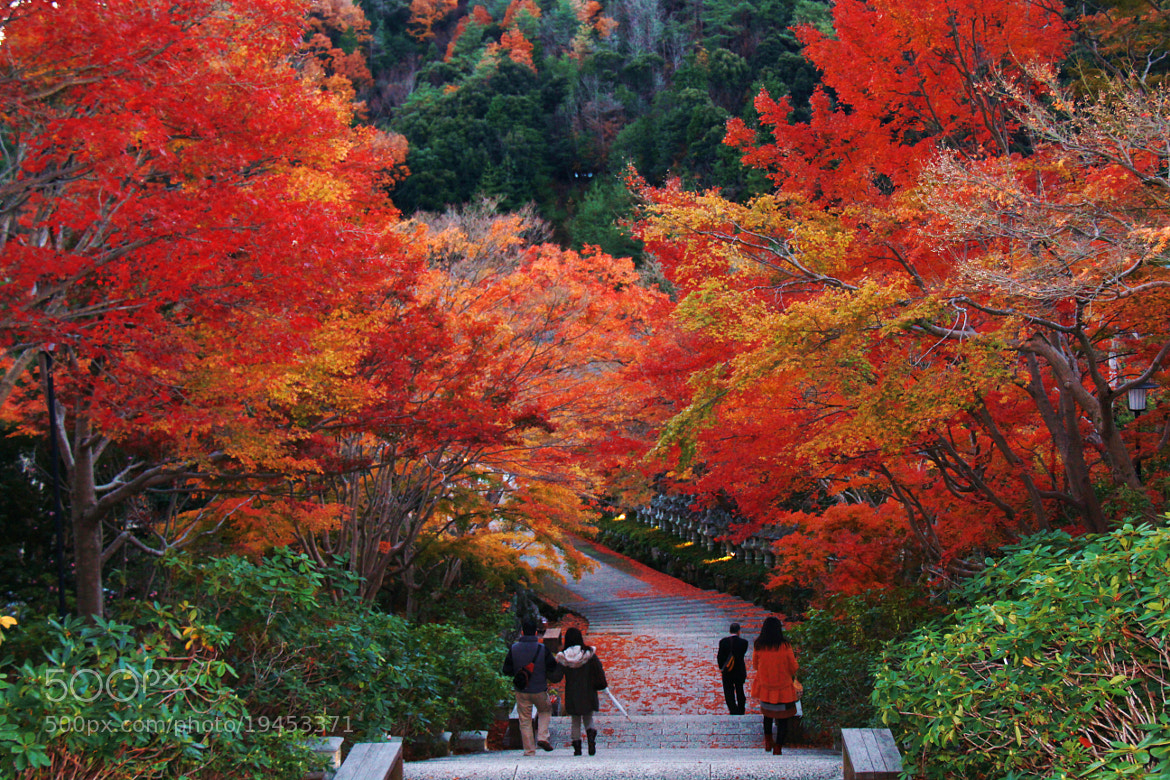 Photograph Autumn colors #13 by S.m. Yang on 500px