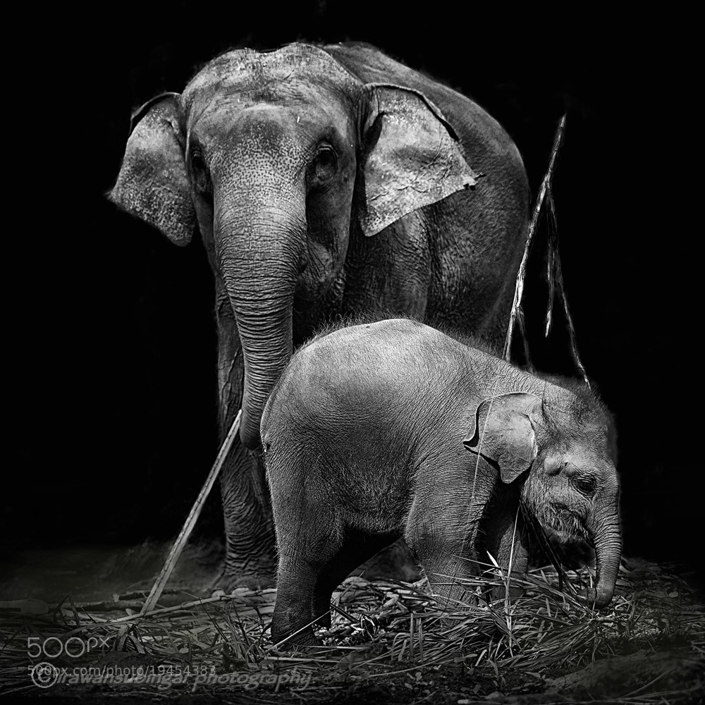 Photograph with mommy by Irawan Subingar on 500px
