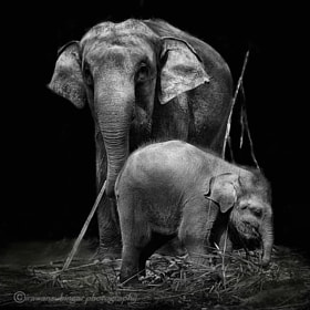 with mommy by Irawan Subingar (Irawan-Subingar)) on 500px.com