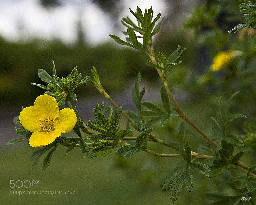Photograph La flor de verano by Svetlana Luz (SoY) on 500px