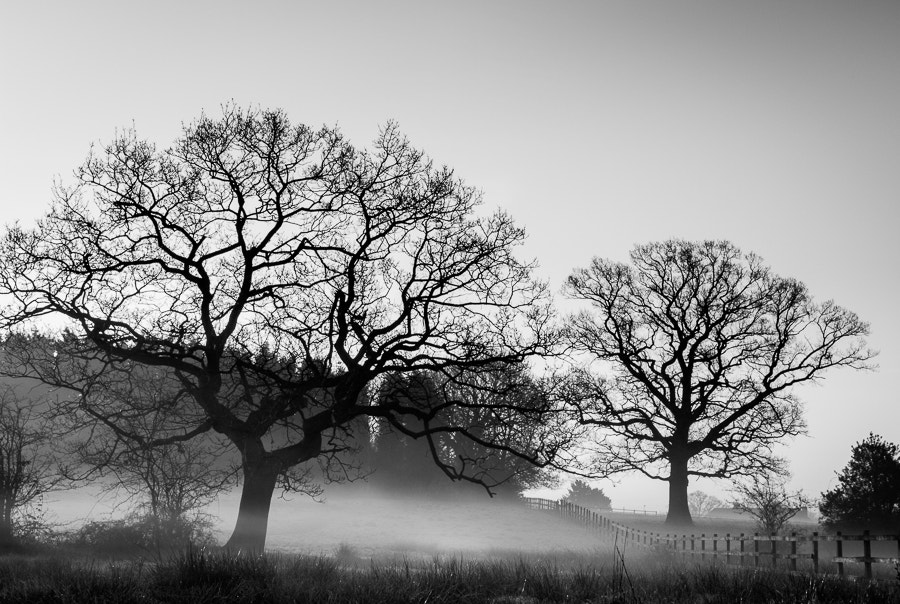Photograph Morning Stirs by Dave Gregory on 500px