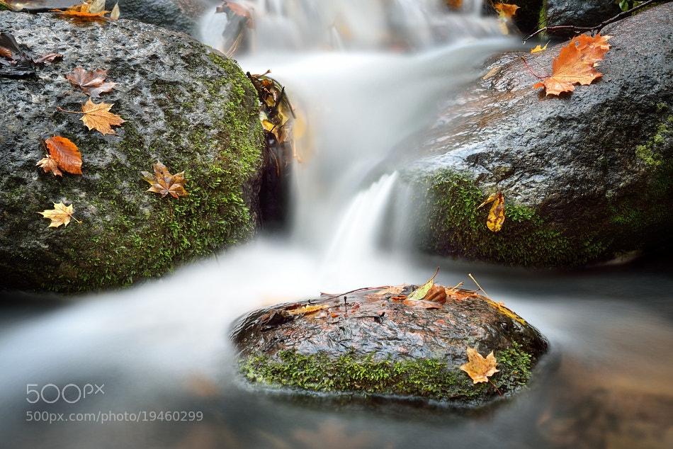 Photograph Jesienny potok. by Grzegorz Lewandowski on 500px