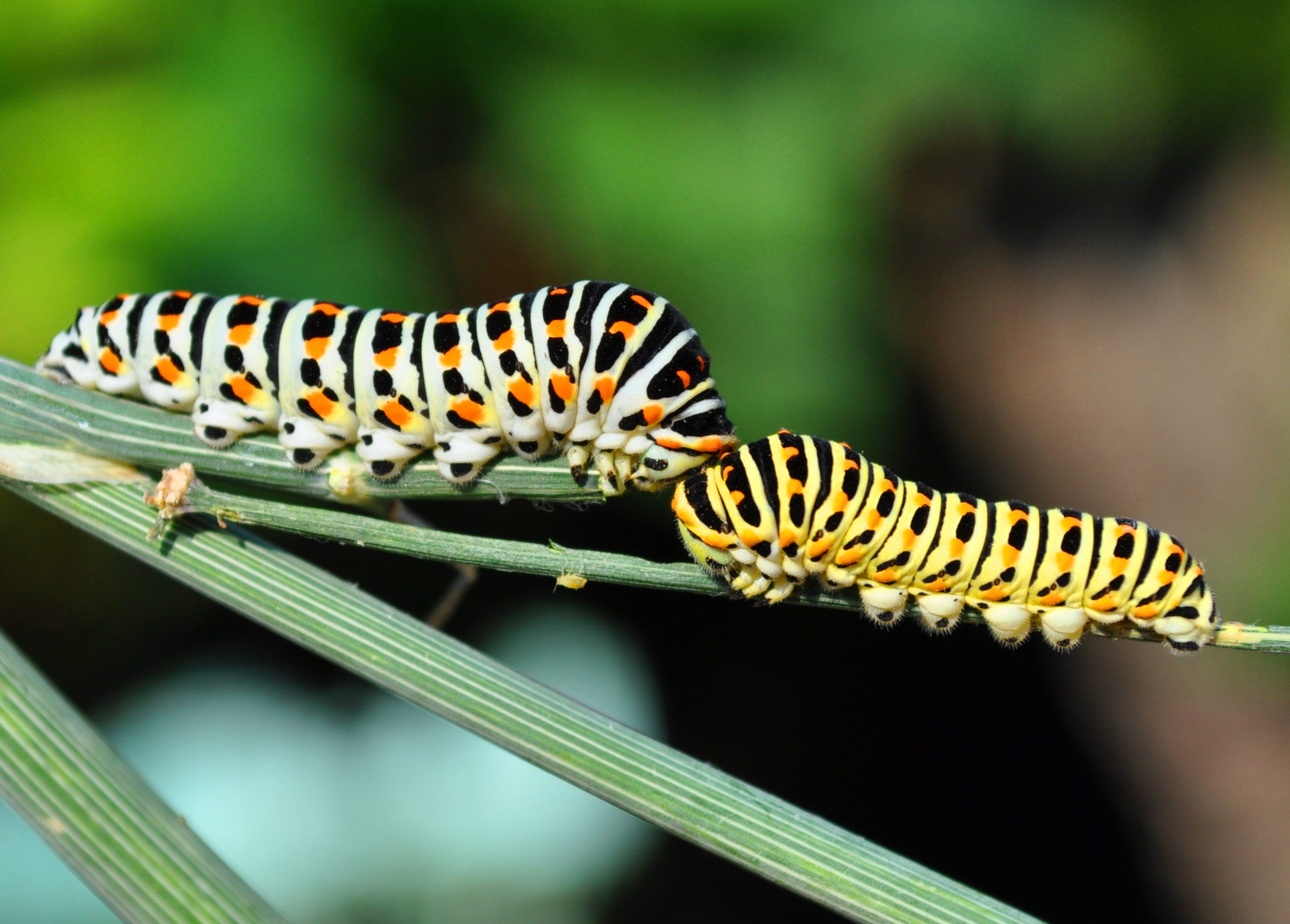 Photograph The Little Caterpillars by Todor Neykov on 500px