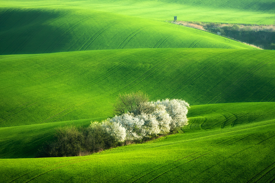 Photograph Green  carpet by Marcin Sobas on 500px