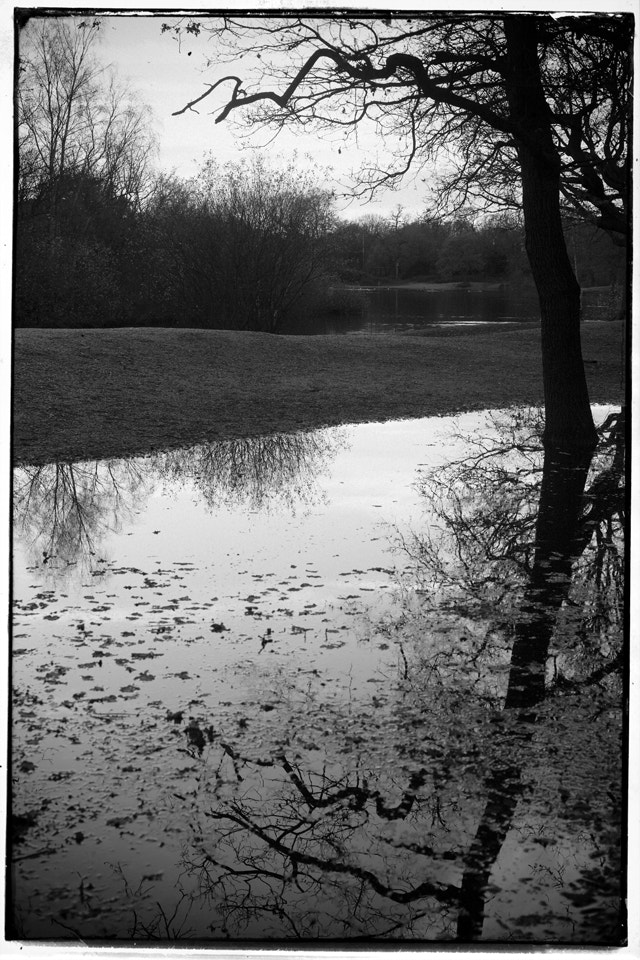 Photograph Epping Forest by Paula Smith on 500px