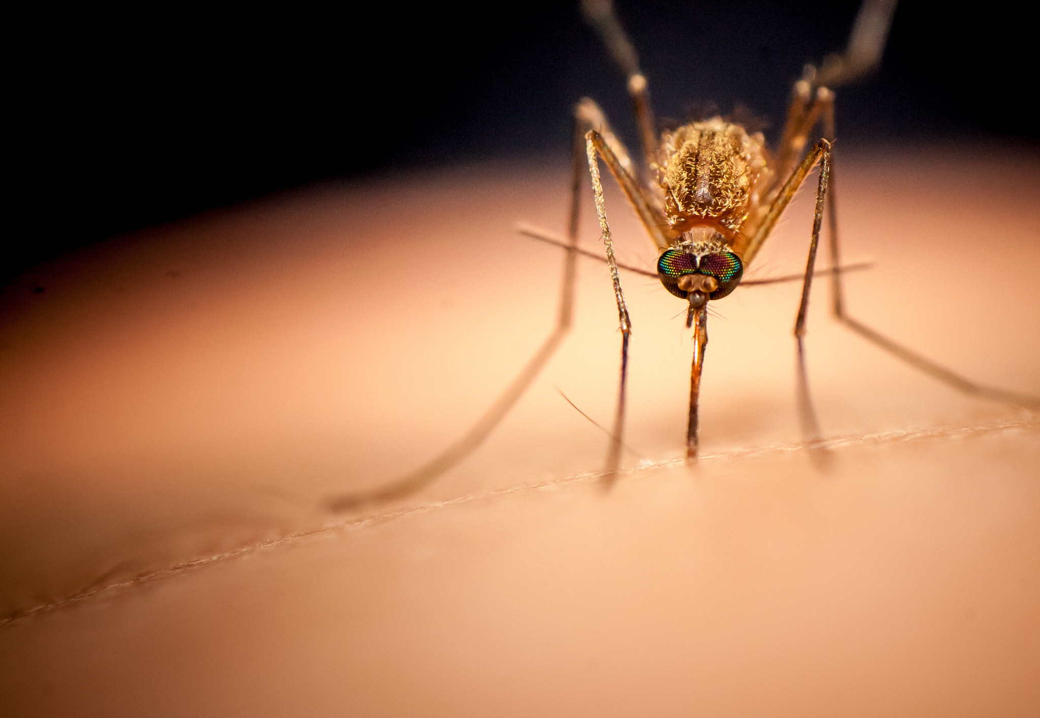 Photograph Mosquito under injection by Man Inthe Street on 500px