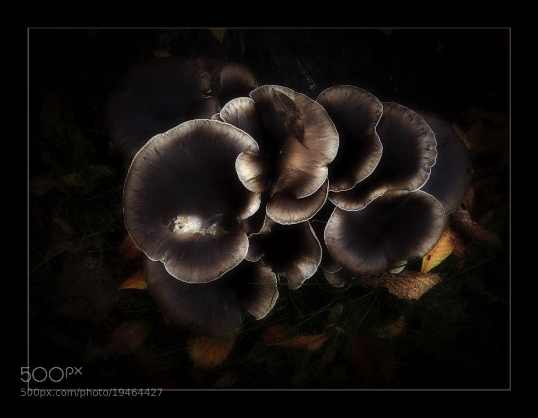 Photograph In a Dark Forrest by Laszlo Baranyai on 500px