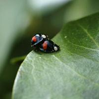 Kute Bug Doing Kute Thing :D