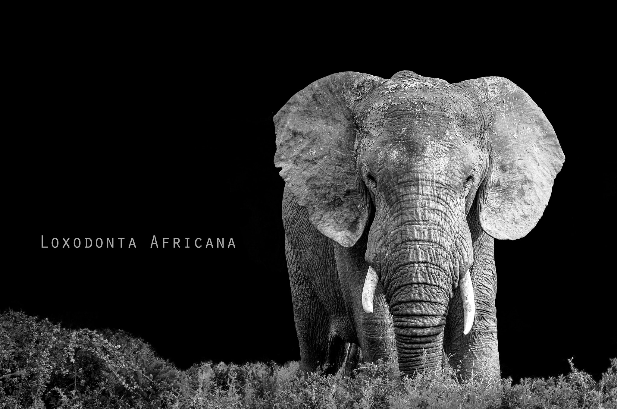 Photograph Giant In The Bush Edit by Omer Nave on 500px