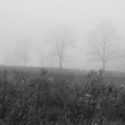 Trees In The Fog, Canon EOS 5D MARK II, Canon EF 28-80mm f/3.5-5.6 USM