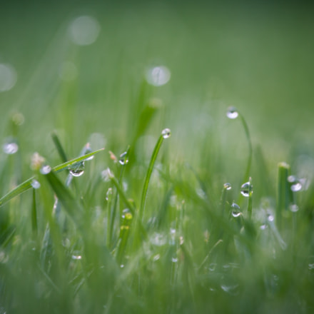 Grass, Canon EOS 70D, Canon EF-S 55-250mm f/4-5.6 IS STM