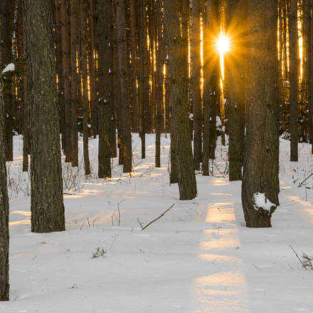 Sunset in winter forest, Sony ILCA-77M2, Tamron 16-300mm F3.5-6.3 Di II PZD