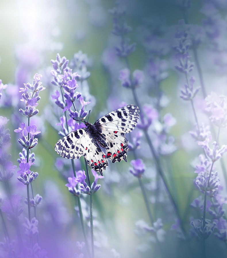 ~~~~~*O*~~~~~ by Juliana Nan on 500px.com