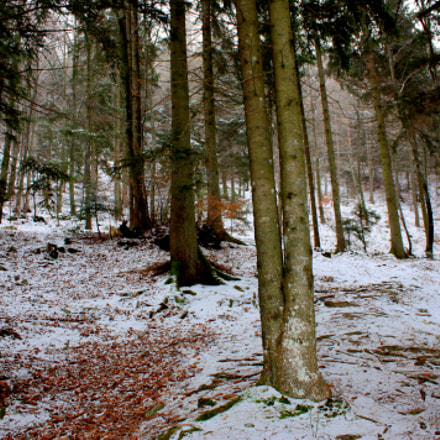 Winter forest, Canon EOS 450D, Canon EF-S 18-55mm f/3.5-5.6 IS