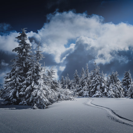 winter forest II, Canon EOS 550D, Canon EF 17-40mm f/4L