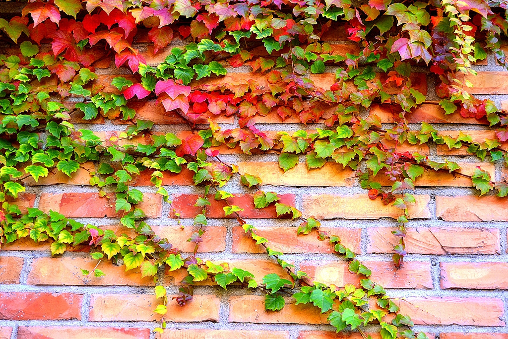 Photograph Floral Wall by Robbie Russo on 500px