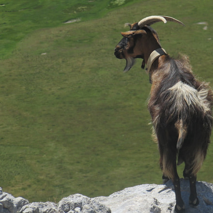 A mountain goat's view, Canon POWERSHOT SX500 IS