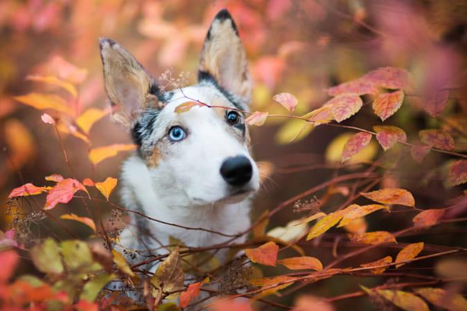 Memory of autumn