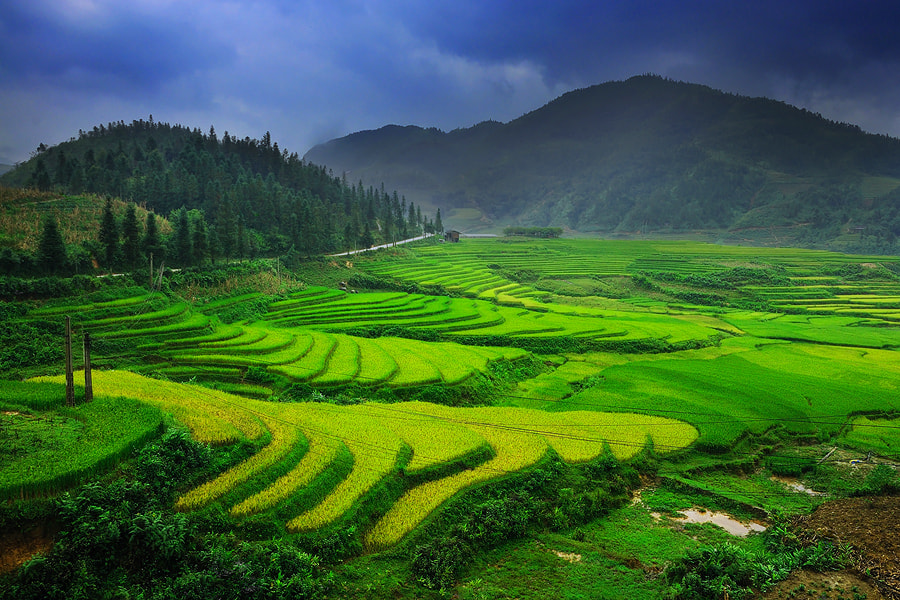 Photograph Terrace Field,Sapa by Wanasapong Jaiinpol on 500px