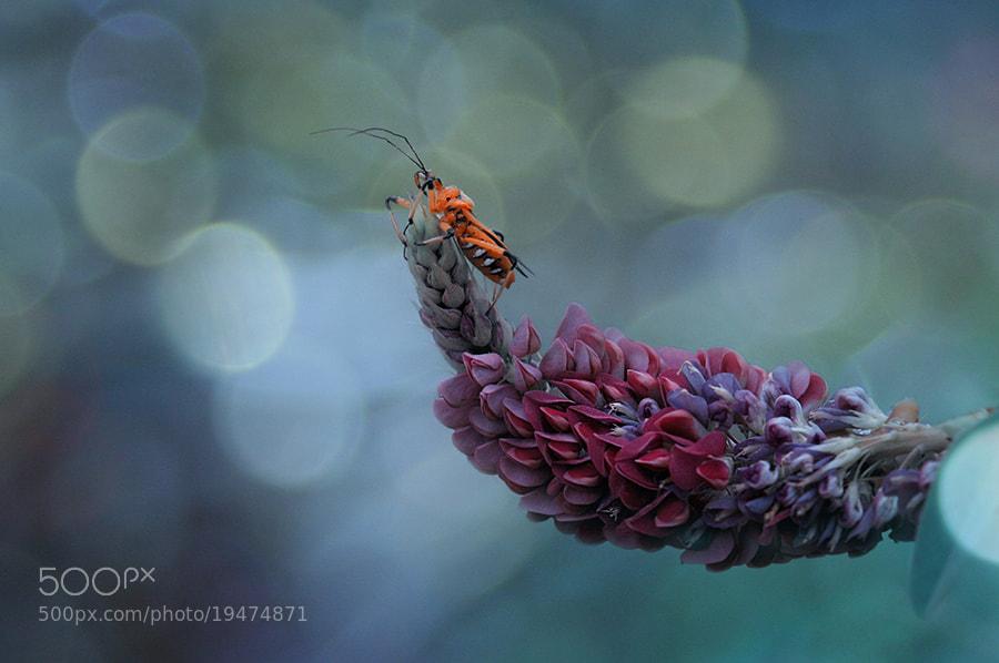 Photograph simply bloom by Ayie  Permata Sari on 500px