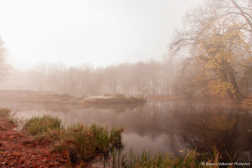 Photograph from fall to winter by Bianca Valkenier on 500px