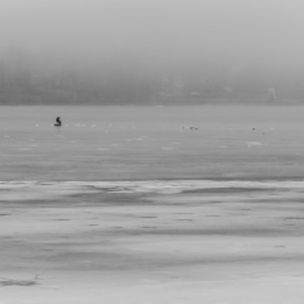 Alone On the Ice, Canon EOS 5D MARK II, Canon EF 28-80mm f/3.5-5.6 USM