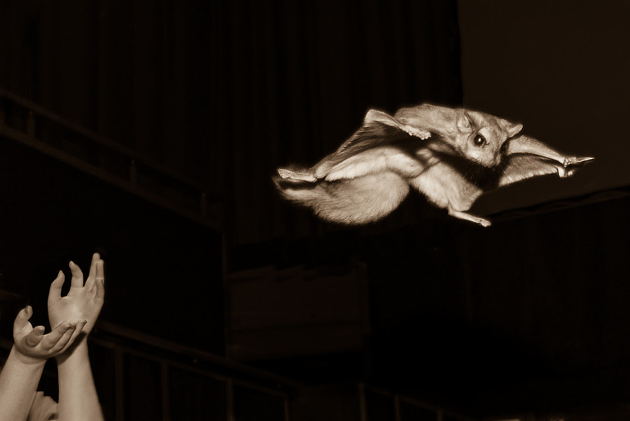 I believe I can fly!!! by Bernie Bertrand on 500px.com