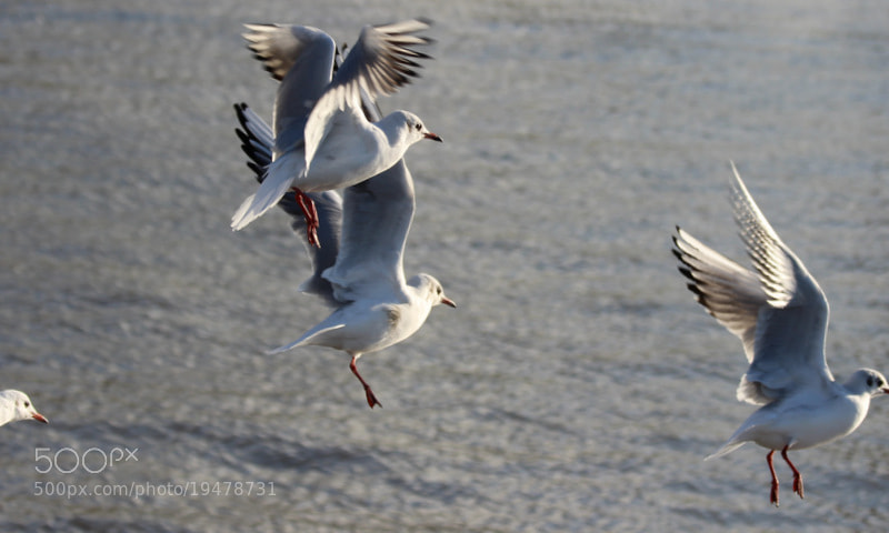 Photograph Landing by Marion Doescher on 500px