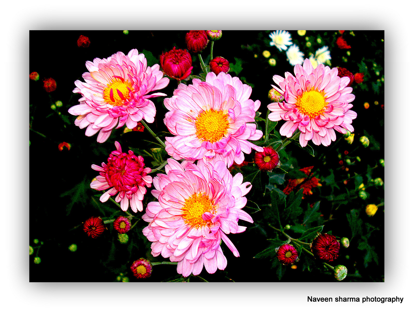 Photograph Flowers of great attractions by naveen sharma on 500px
